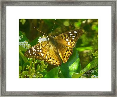 Nature In The Wild - Kaleidoscope Of Color Framed Print by Lucyna A M Green