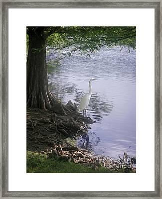 Nature In The Wild - Musings By A Lake Framed Print by Lucyna A M Green
