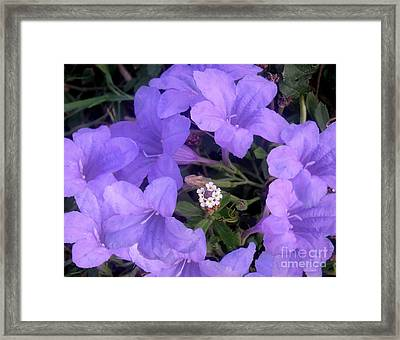 Nature In The Wild - Ring Around The Posy Framed Print by Lucyna A M Green
