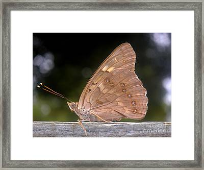 Nature In The Wild - The Autumn Migrant Framed Print by Lucyna A M Green