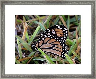 Nature In The Wild - Traveling Light Framed Print by Lucyna A M Green