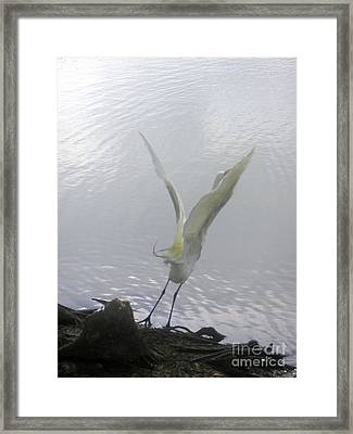 Nature In The Wild - Wind Beneath Its Wings Framed Print by Lucyna A M Green
