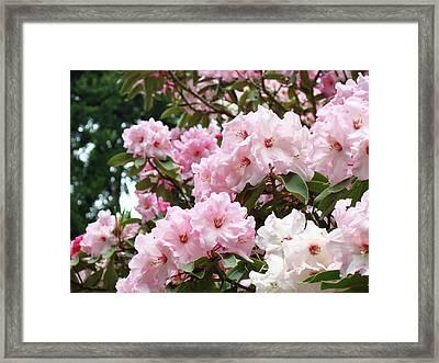 Nature Landscape Art Print Pink Rhododendrons Baslee Troutman Framed Print