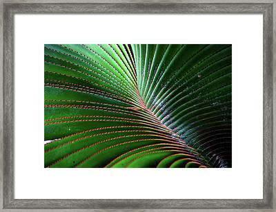 Nature Light And Line Framed Print by Jae Mishra