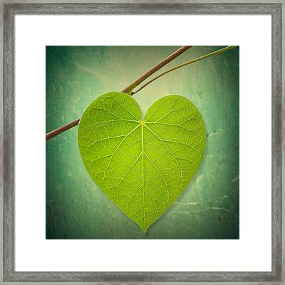 Nature Lover Framed Print by Philippe Sainte-Laudy