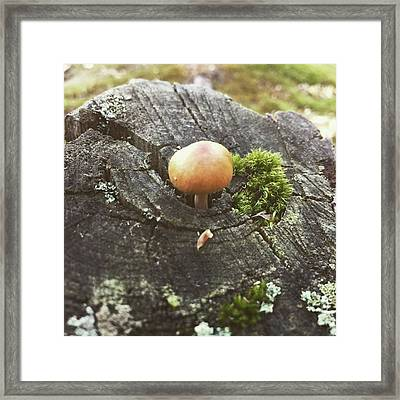 #nature #naturelovers #puremichigan Framed Print