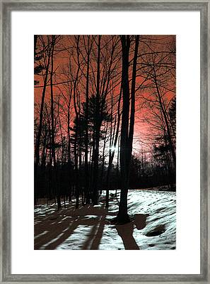 Nature Of Wood Framed Print by Mark Ashkenazi