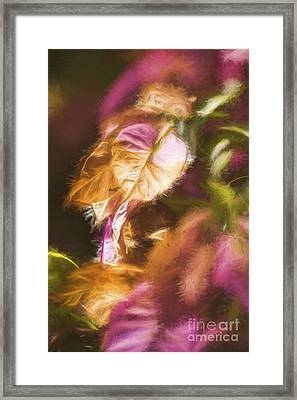 Nature Pastel Artwork Framed Print by Jorgo Photography - Wall Art Gallery