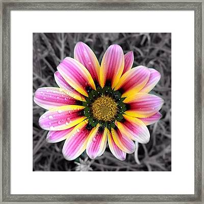 Nature. Framed Print
