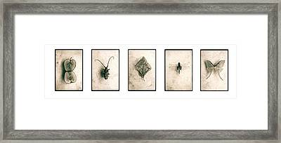 Nature Series Framed Print