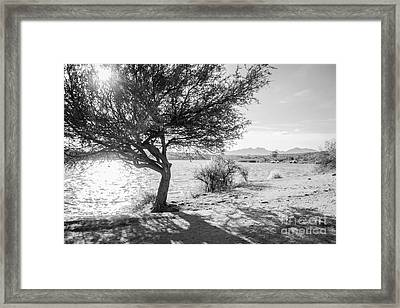Nature Framed Print by Silvia Bruno
