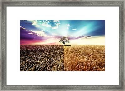 Nature Simetry Framed Print by Ivan Vukelic