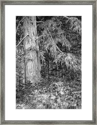 Nature Study No 1 Framed Print