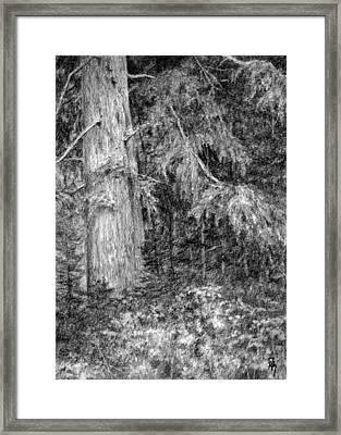 Nature Study No 1 Framed Print