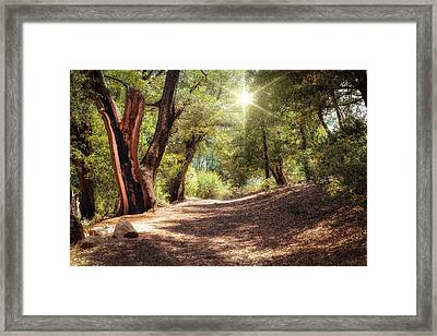 Nature Trail Framed Print