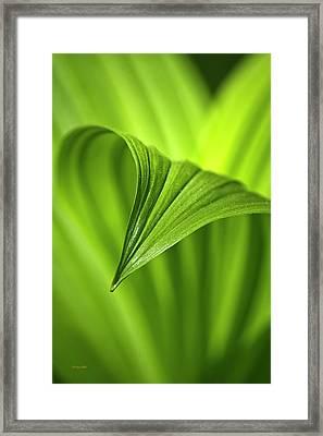 Nature Unfurls Framed Print by Christina Rollo
