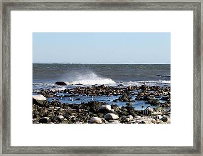 Nature Vs. Nature Framed Print by John Telfer