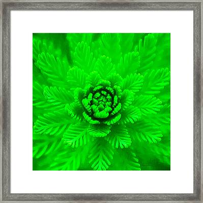 Nature's Abstract  Framed Print by Stacey Chiew
