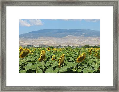 Natures Amazing Creation Framed Print