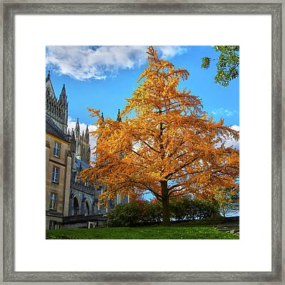 Framed Print featuring the photograph Natures Architecture by Mitch Cat