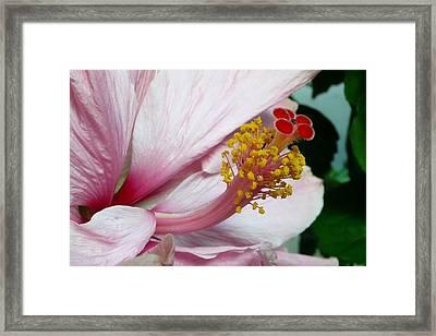 Natures Art Framed Print by Lori Seaman