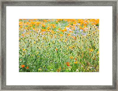 Nature's Artwork - California Wildflowers Framed Print by Ram Vasudev