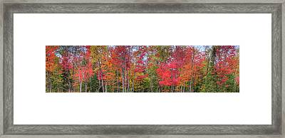 Framed Print featuring the photograph Natures Autumn Palette by David Patterson