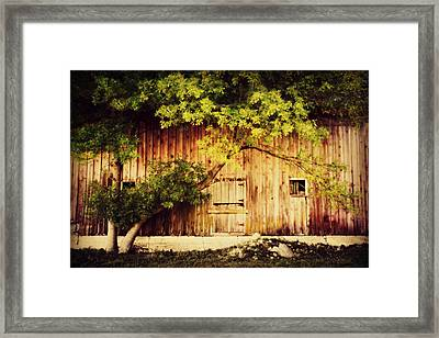 Natures Awning Framed Print by Julie Hamilton