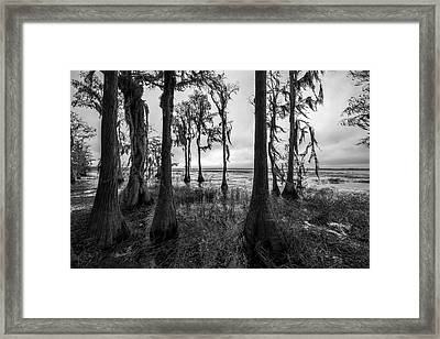 Natures Bath Framed Print