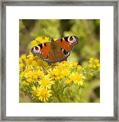 Framed Print featuring the photograph Nature's Beauty by Ian Middleton