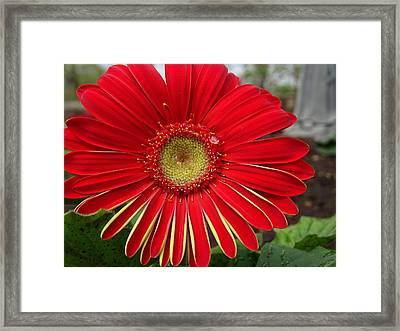 Natures Best Framed Print