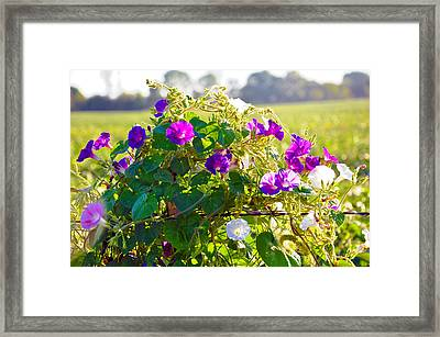 Natures Bouquet  Framed Print by Brittany H