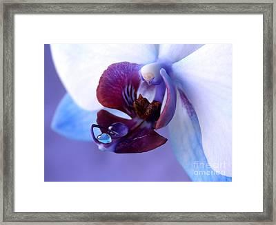 Natures Brilliance Framed Print