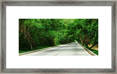 Framed Print featuring the photograph Nature's Canopy by Cameron Wood