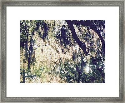 Natures Canopy Framed Print by Sherry Gombert