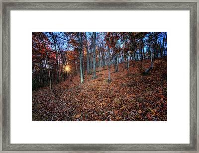 Nature's Carpet Framed Print