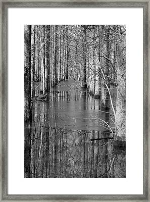 Nature's Cathedral - Black And White Art Print Framed Print