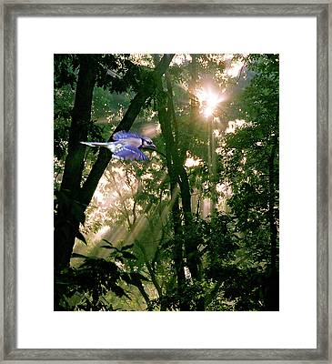 Framed Print featuring the photograph Nature's Cathedral by Marie Hicks
