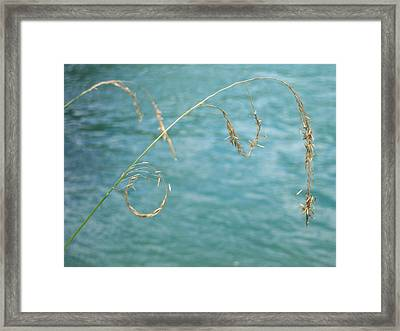 Nature's Circle Art Framed Print by Ken Day