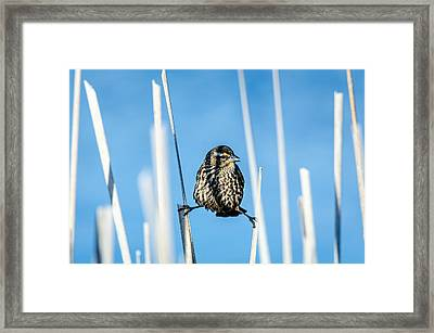 Framed Print featuring the photograph Nature's Circus by Steven Santamour