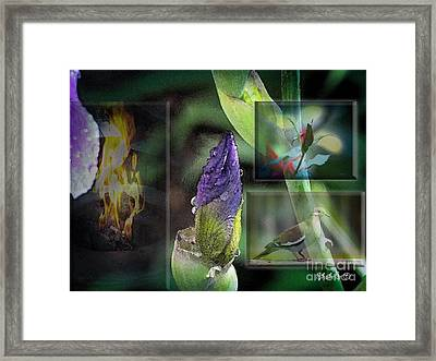 Natures Collage Framed Print