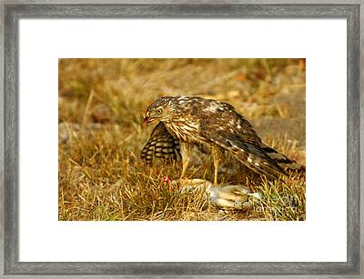 Nature's Course Framed Print by Marc Bittan