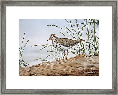 Nature's Delicate Beauty Framed Print by James Williamson