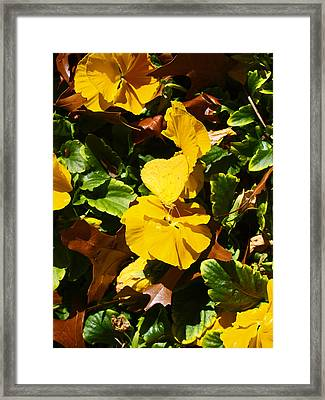Nature's Disquise II Framed Print by James Granberry