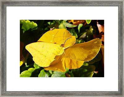 Nature's Disquise V Framed Print by James Granberry