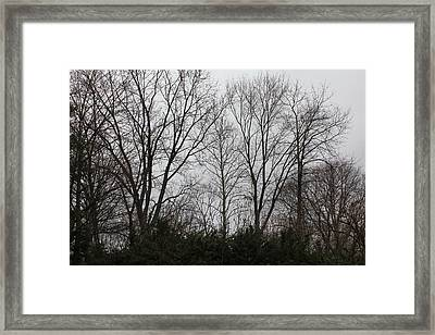 Nature's Expression 22 Framed Print