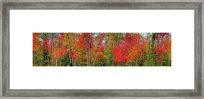 Framed Print featuring the photograph Natures Fall Palette by David Patterson