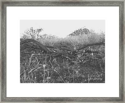 Nature's Fences Framed Print