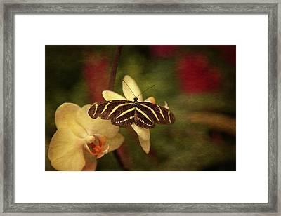 Natures Flutter Framed Print