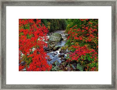 Natures Frame Framed Print